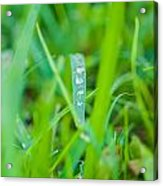Water Drops On The  Grass 0020 Acrylic Print