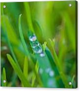 Water Drops On The  Grass 0021 Acrylic Print