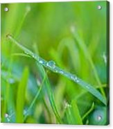 Water Drops On The  Grass 0026 Acrylic Print