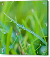 Water Drops On The  Grass 0029 Acrylic Print
