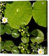Water Drops Bristol Rhode Island Acrylic Print
