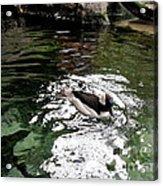 Water Duck Acrylic Print