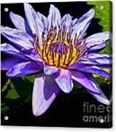 Water Flower Acrylic Print by Nick Zelinsky