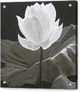 Water Flower Acrylic Print