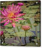 Water Garden Dream Acrylic Print