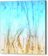 Water Grass - Outer Banks Acrylic Print