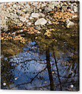 Water Leaves Stones And Branches Acrylic Print