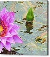 Water Lilies 001 Acrylic Print