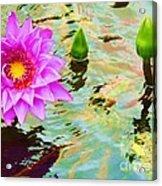 Water Lilies 002 Acrylic Print