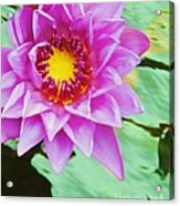 Water Lilies 003 Acrylic Print