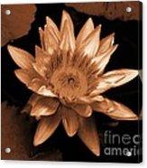 Water Lilies 012 Acrylic Print