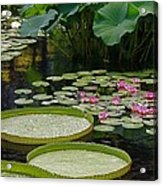 Water Lilies And Platters And Lotus Leaves Acrylic Print