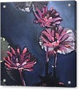 Water Lilies At Sunset Acrylic Print