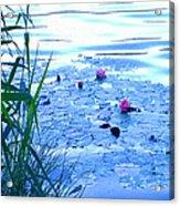 Water Lilies Blue Acrylic Print