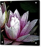 Water Lilies I Acrylic Print