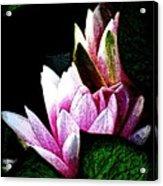 Water Lilies IIi Acrylic Print