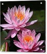 Water Lilies Love The Sun Acrylic Print by Sabrina L Ryan