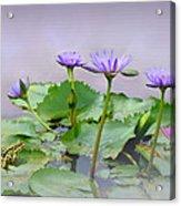 Water Lilies Of Vietnam Acrylic Print