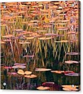 Water Lilies Re Do Acrylic Print