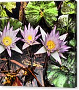 Water Lilies Water Drop And Reflection In Water Acrylic Print