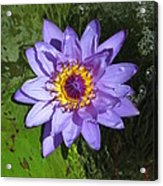 Water Lily 2013 Acrylic Print