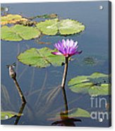 Water Lily And Dragon Fly One Acrylic Print