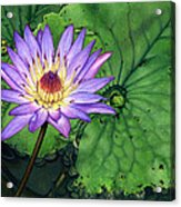 Water Lily At The Conservatory Of Flowers Acrylic Print