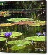 Water Lily Garden 2 Acrylic Print