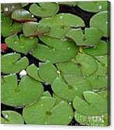 Water Lily Leaves Acrylic Print