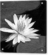 Water Lily On Pad Acrylic Print