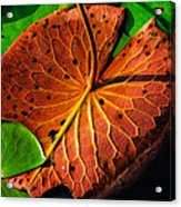 Water Lily Pad Acrylic Print