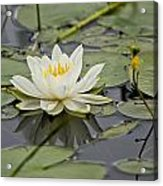 Water Lily Pictures 45 Acrylic Print