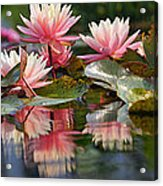 Water Lily Profusion Acrylic Print