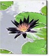 Water Lily - Purple Power - Photopower 1376 Acrylic Print
