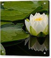 Water Lily Reflection II Acrylic Print