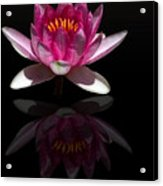 Water Lily Reflection Acrylic Print