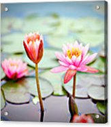 Water Lily's II Acrylic Print by Tammy Smith
