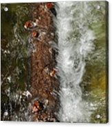 Water Logged Acrylic Print