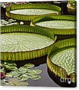 Water Platter Charm Acrylic Print