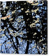 Water Reflections Acrylic Print
