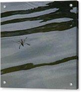 Water Skipper In Digital Oil Pastel Acrylic Print