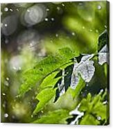 Water-the Essence Of Life V3 Acrylic Print