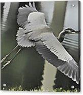 Waterbird Flying Acrylic Print