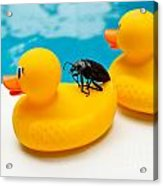 Waterbug Takes Yellow Taxi Acrylic Print by Amy Cicconi