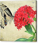 Watercolor Butterfly Acrylic Print