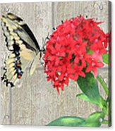 Watercolor Butterfly Two Acrylic Print