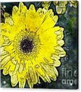 Watercolor Daisy Acrylic Print