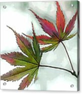 Watercolor Japanese Maple Leaves Acrylic Print