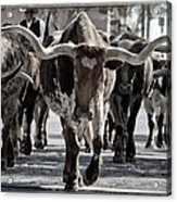 Watercolor Longhorns Acrylic Print