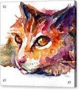 Watercolor Orange Tubby Cat Acrylic Print